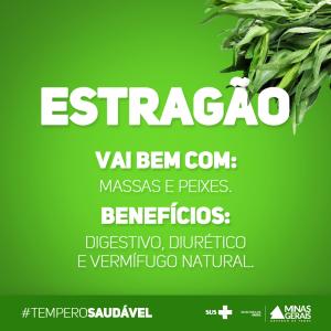 Temperos saudáevis #3_estragão