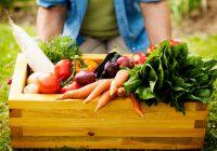 alimentos-organicos-1-860x485